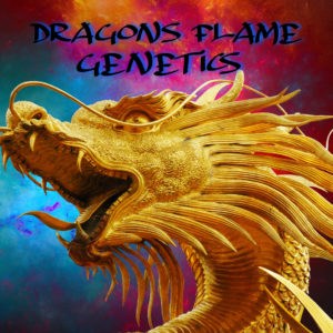 Dragons Flame Genetics